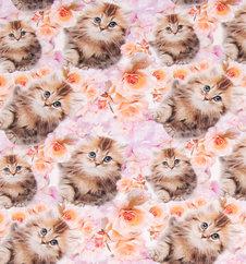 Kattungar - Ekologiskt