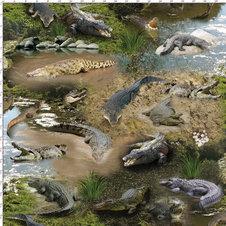 Krokodiler - Ekologiskt