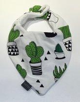Dregglis Cactus white
